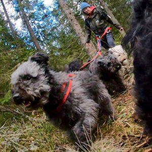 Bild på hundnivå av skogspromenad.
