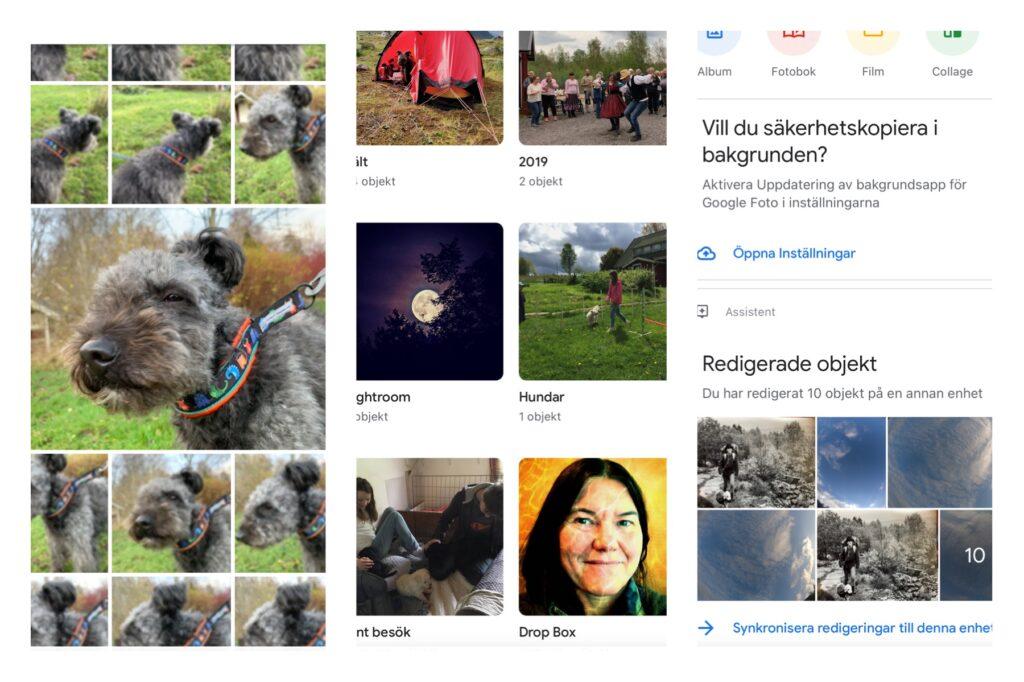 Skärmdumpar från Google Foto. Många bilder på samma hund.